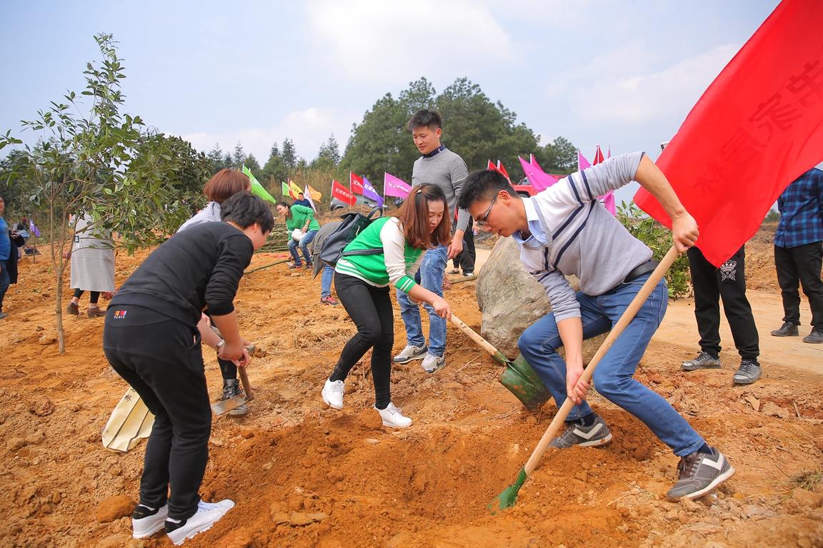 重庆家居人种植樟桂1.JPG
